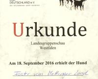 09_WestfalenLandesgruppenjugendsieger